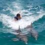 Dolphin 6