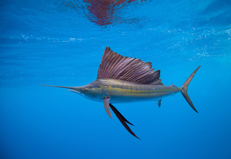Deep sea fishing the top boat charters for Best deep sea fishing