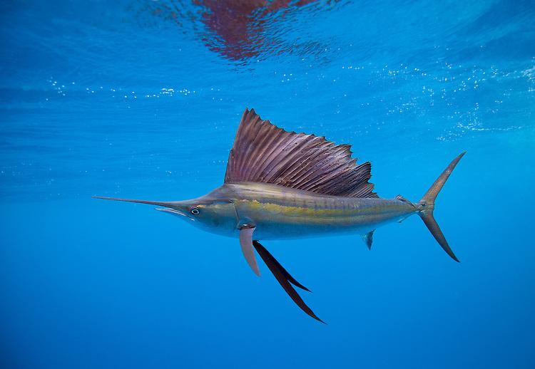 Deep sea fishing the top boat charters for Deep ocean fish